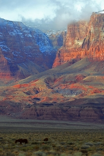 Vermillion Cliffs National Monument Arizona