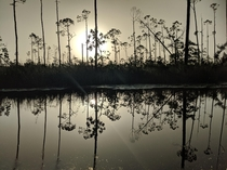Very reflective creek on the Florida panhandle