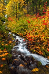 Vibrant fall colors along a waterfall in the Columbia River Gorge