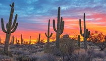 Vibrant Sunrise Sky With Stately Saguaro Cactus In North Scottsdale Arizona  IG swvisionsnow