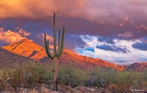 Vibrant Sunset Landscape In North Scottsdale AZ Desert Preserve