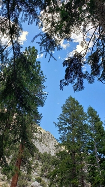 View from my hammock  Mt Whitney California x
