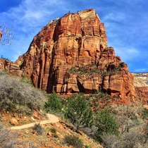 View from the bottom of Angels Landing in Zion NP Utah OC x