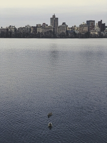View of Jacqueline Kennedy Onassis Reservoir  ducks and New York City
