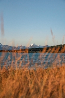 View of Mt Cook over Lake Pukaki I was amongst these plants for far too long waiting for the perfect light - South Island New Zealand -