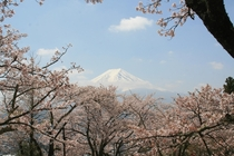 View of Mt Fuji taken from the Chureito Pagoda in Japan a month ago  x