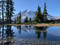 View of Mt Rainier from Plummer Peak -