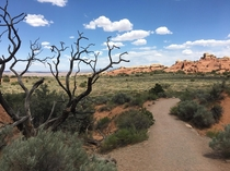 View of Utahs Arches National Park from the Pine Tree Arch trail x