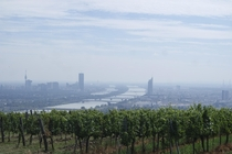 Vineyards above Vienna and the Danube
