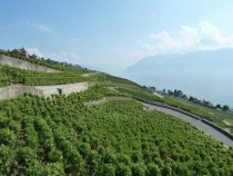 Vineyards in Lutry Switzerland