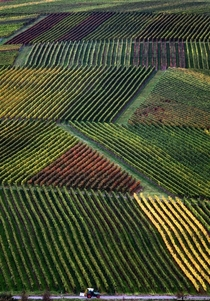 Vineyards in Nordheim Germany  Photo by Karl-Josef Hildenbrand