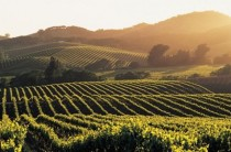Vineyards in the Napa Valley California