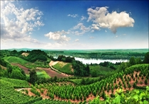 Vineyards in Vojvodina Serbia  Photo by Katarina Stefanovic
