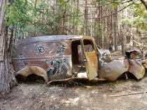 Vintage car with great graffiti left to rot in the middle of the woods