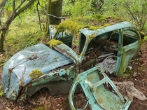 Volkswagen Beetle abandoned in a rainy mossy forest on Vancouver Island
