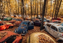 Volkswagen Graveyard Check out these East Coast fall vibes