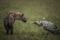 Vulture and Hyena