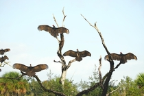 Vultures Getting Some Sun