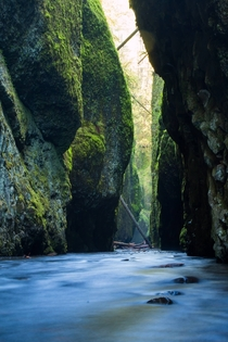 Wading through freezing water for this Oneonta Gorge OR