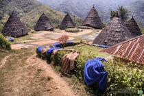 Wae Rebo in Flores Island Indonesia an indigenous village of coffee producers hidden in the jungle