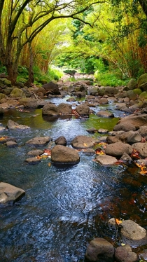 Waimea Valley Hawaii Photo by James Nielson
