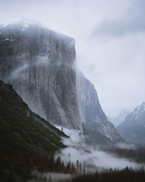 Waited several mornings in a row to get some low hanging fog in Yosemite CA