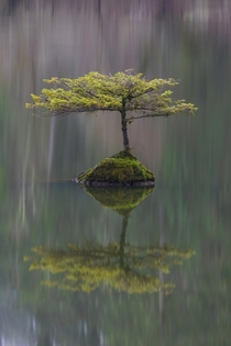 Waiting For a Friend - A lonely tree in Fairly Lake Vancouver Island Canada  photo by Carrie Cole