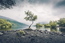 Wales doesnt get much attention here but visiting the lone tree in Snowdonia was really stunning
