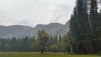 Walking among giants in the Yosemite valley