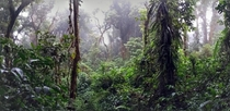 Walking in a Cloud Forrest Monteverde CR