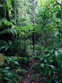 Walking through a rain forest Santa Fe Panama xOC