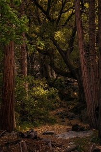 Walking through the woods in Yosemite National Park CA