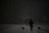 Walking with dogs in snow