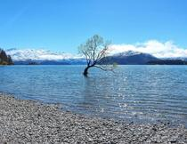 Wanaka New Zealand  x