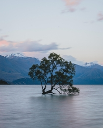 Wanaka Tree in Wanaka New Zealand