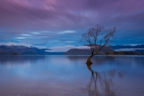 Wanaka Tree - New Zealand