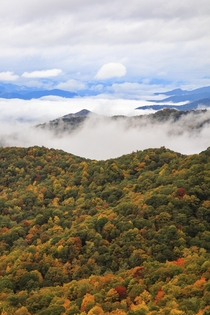 Warm Apple Cider Fall Leaves and the Great Smoky Mountains TN What more can I ask for