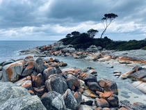 Watch more nature than Netflix  Stunning Bay of Fires Tasmania  x