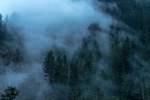 Watching fog moving smoothly around alpine trees and waterfalls on a moody evening in the mt Baker wilderness Washington USA