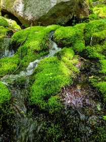 Water cutting through a moss patch on the TriPyramid Mountains