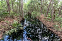 Water so black it looked like a river of oil Blackwater stream in central Florida