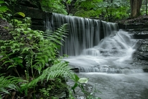 Waterfall and ferns on a rainy day in Ithaca NYOC