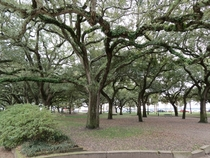 Waterfront Park - Charleston SC