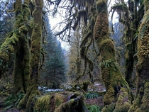 We found FernGully Hoh Rain Forest - Olympic National Park