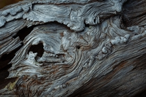 Weathered Log BC Canada