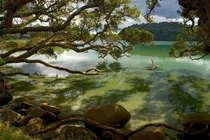 Wenderholm Regional Park outside Auckland NZ  by unknown National Geographic staff