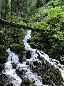 Went for a hike around Multnohmah Falls