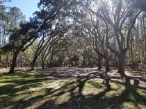 Went for a stroll under the Spanish moss with my son Wormsloe Historic Site Savannah GA