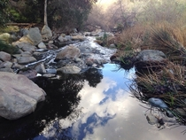 Went hiking the other day Didnt know I caught this reflection California