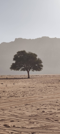 Went to Wadi Rum Jordan and found this lone tree growing in the middle of the desert in absolutely trying conditions